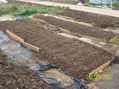 2-beds-of-onions.jpg